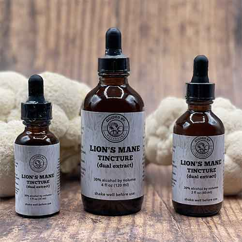 Guided By Mushrooms Lions Mane Tincture